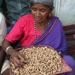 Cleaning groundnuts after harvest in India