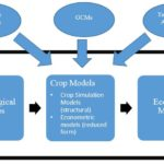 Structural Approaches and Technology Adoption: A new paper in Global Food Security