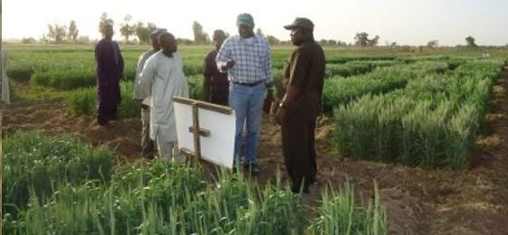 Prospects for wheat self-sufficiency in sub-Saharan Africa based on adoption of improved management practices and wheat area expansion